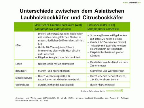 Unterschiede zwischen dem Asiatischen Laubholzbockkäfer und Citrusbockkäfer - Arthropoden, Käfer/Schmetterlinge, Symptomatik/Diagnostik - ALB, Arthropoden, CLB, Käfer/Schmetterlinge, Symptomatik/Diagnostik