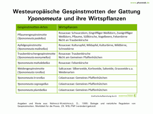 Westeuropäische Gespinstmotten der Gattung Yponomeuta und ihre Wirtspflanzen - Arthropoden, Käfer/Schmetterlinge, Symptomatik/Diagnostik - Arthropoden, Gespinstmotten, Käfer/Schmetterlinge, Symptomatik/Diagnostik