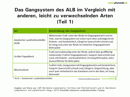 Das Gangsystem des ALB im Vergleich mit anderen, leicht zu verwechselnden Arten (Teil 1) - Arthropoden, Käfer/Schmetterlinge, Symptomatik/Diagnostik - ALB, Arthropoden, Käfer/Schmetterlinge, Symptomatik/Diagnostik