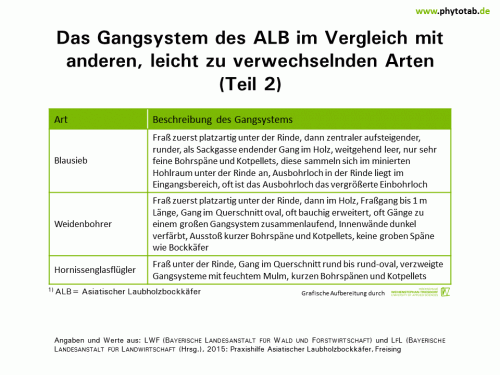 Das Gangsystem des ALB im Vergleich mit anderen, leicht zu verwechselnden Arten (Teil 2) - Arthropoden, Käfer/Schmetterlinge, Symptomatik/Diagnostik - ALB, Arthropoden, Käfer/Schmetterlinge, Symptomatik/Diagnostik