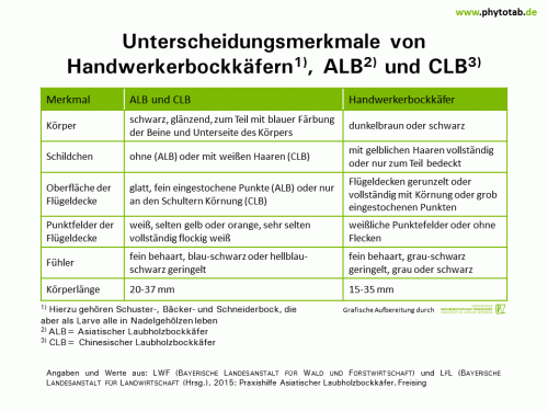 Unterscheidungsmerkmale von Handwerkerbockkäfern, ALB und CLB - Arthropoden, Käfer/Schmetterlinge, Symptomatik/Diagnostik - ALB, Arthropoden, Käfer/Schmetterlinge, Symptomatik/Diagnostik
