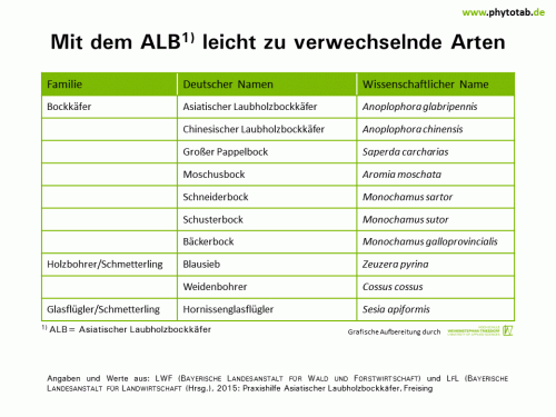 Mit dem ALB leicht zu verwechselnde Arten - Arthropoden, Käfer/Schmetterlinge, Symptomatik/Diagnostik - ALB, Arthropoden, Käfer/Schmetterlinge, Symptomatik/Diagnostik