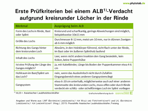 Erste Prüfkriterien bei einem ALB-Verdacht aufgrund kreisrunder Löcher in der Rinde - Arthropoden, Käfer/Schmetterlinge, Symptomatik/Diagnostik - ALB, Arthropoden, Käfer/Schmetterlinge, Symptomatik/Diagnostik