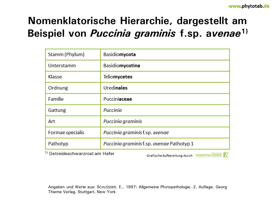 Wunderbar Arten Von Sätzen Einer Tabelle Klasse 6 Fotos ...